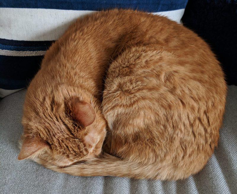 brewer cat donut | kourtney thomas fitness life coach