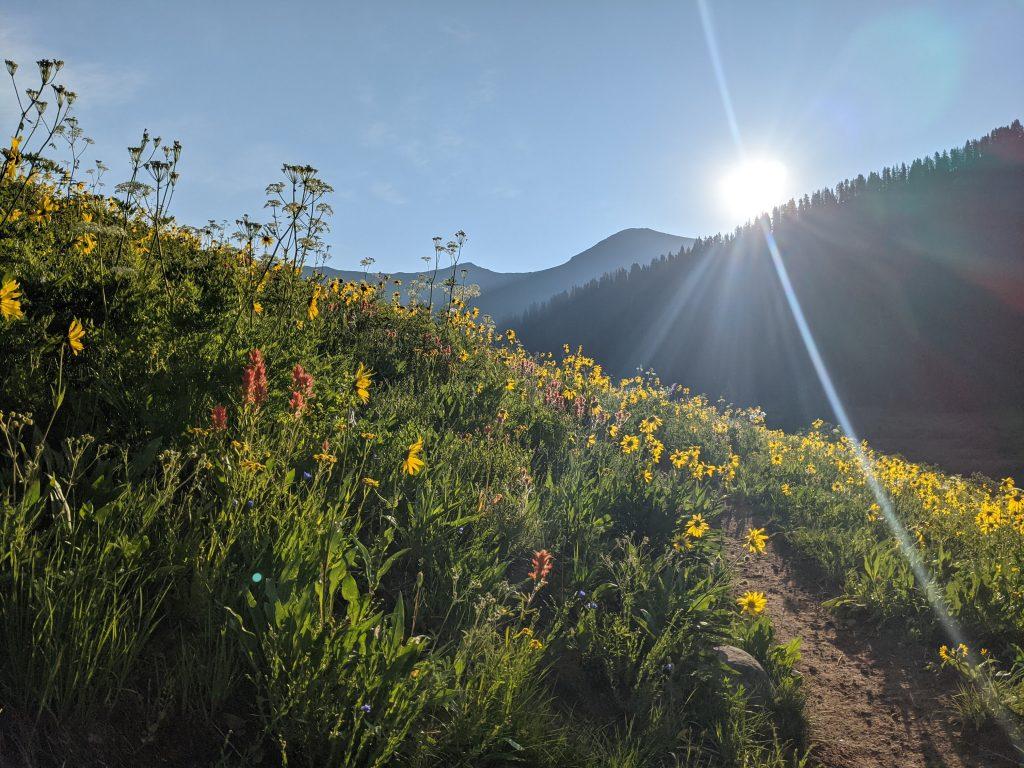more wildflowers! | kourtney thomas fitness life coach